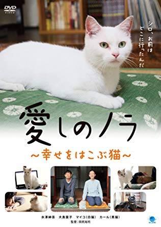 田尻裕司 監督作品『愛しのノラ~幸せのめぐり逢い~』DVD